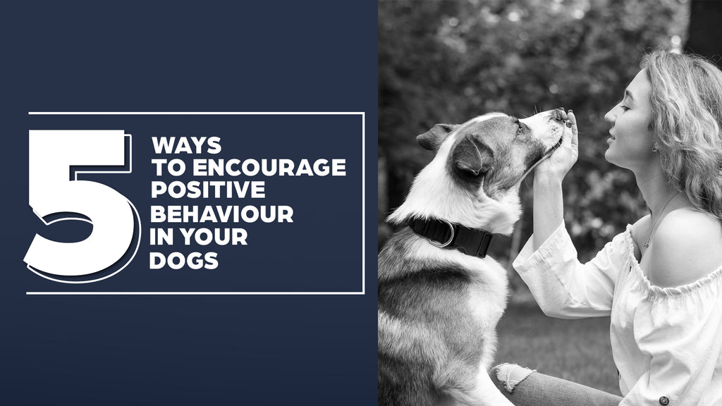 5 Ways To Encourage Positive Behaviour In Your Dog
