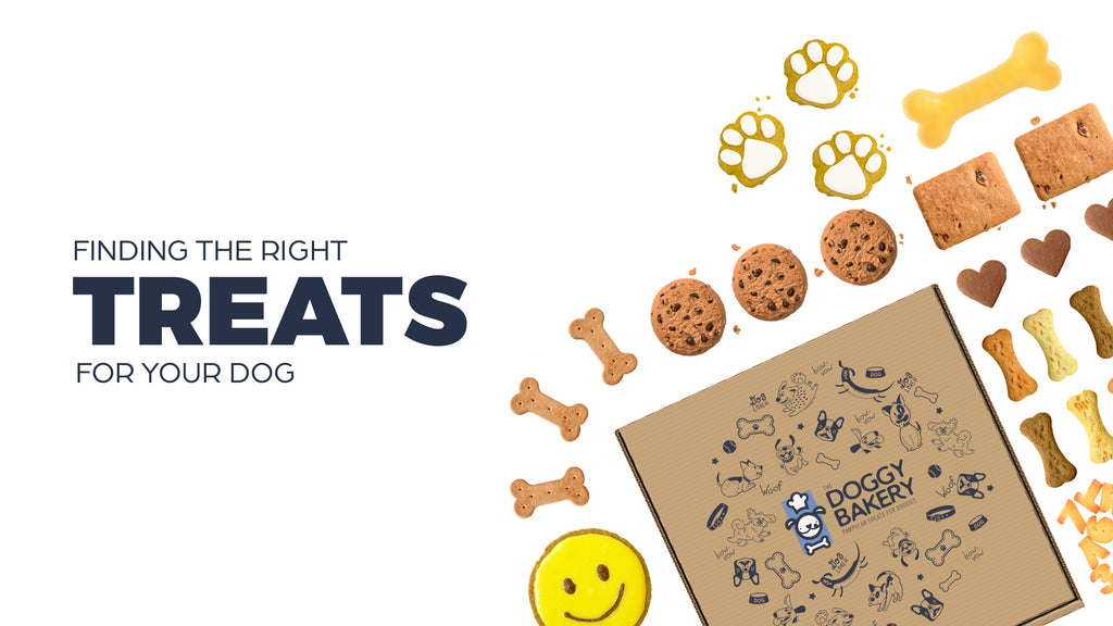 Finding the Right Treat for Your Dog