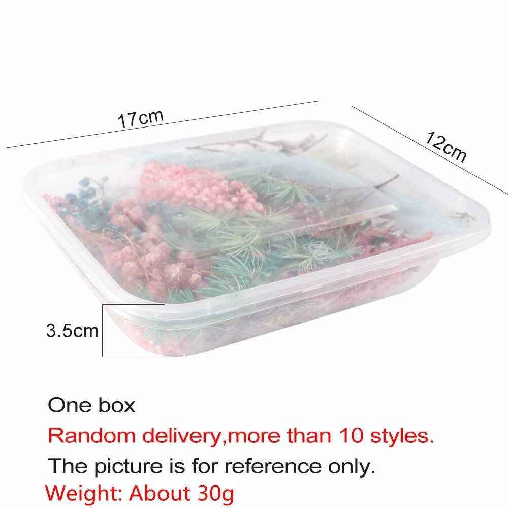 Random 1 Box Preserved Fresh Flower Everlasting flowers Real Dried Flower Dry Plants for Aromatherapy Candle Epoxy Resin Pendant Necklace Jewelry Making Craft DIY Accessories