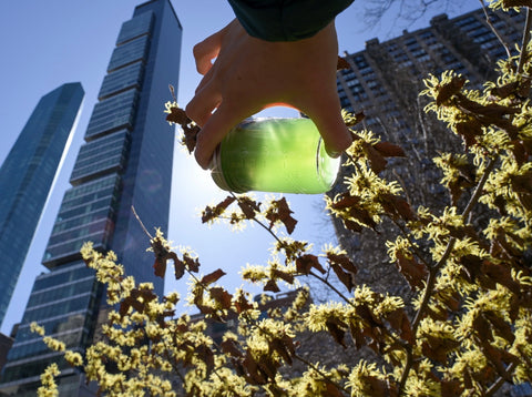 Amelia Vega's spirulina among New York City skyscrapers