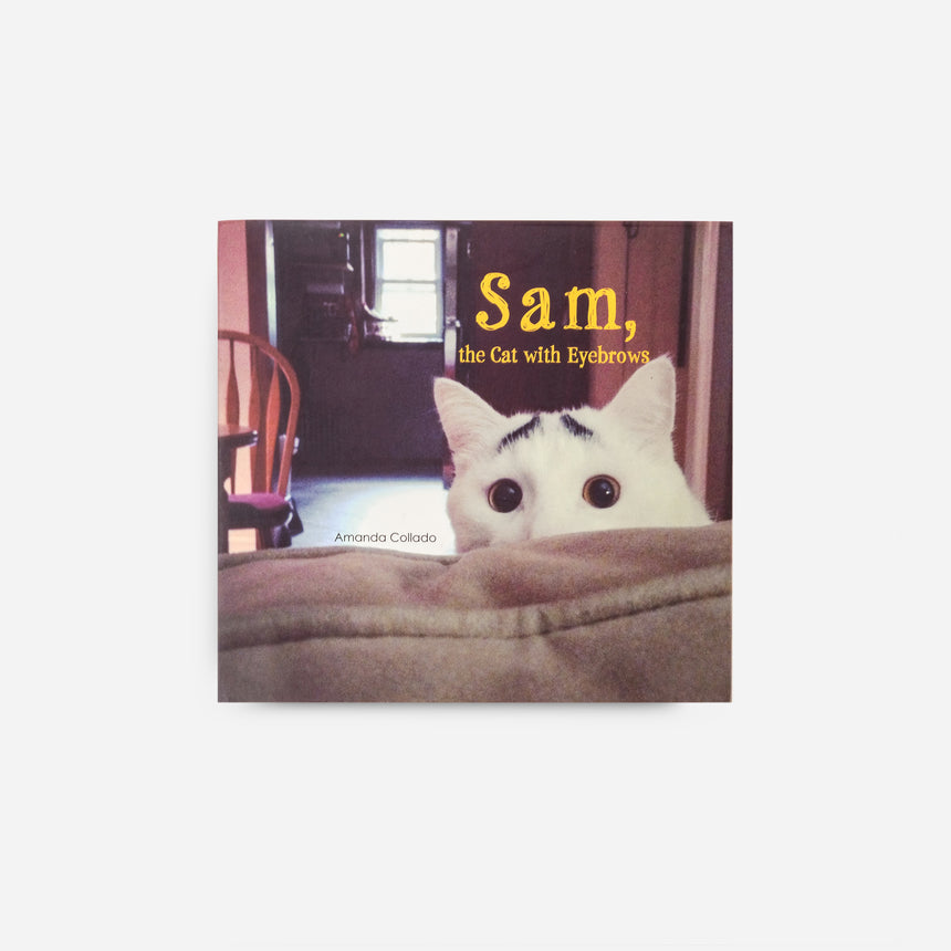 Sam the cat with eyebrow