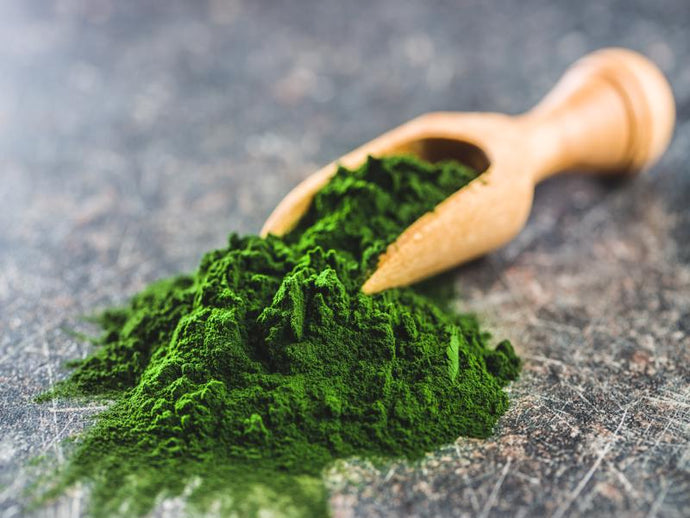 FIND OUT WHAT MAKES CHLORELLA SUCH AN AMAZING SUPERFOOD