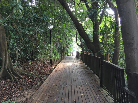 Changi-boardwalk-hike-20