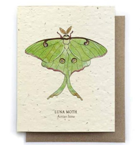 Luna Moth Greeting Card w Plantable Seed Paper