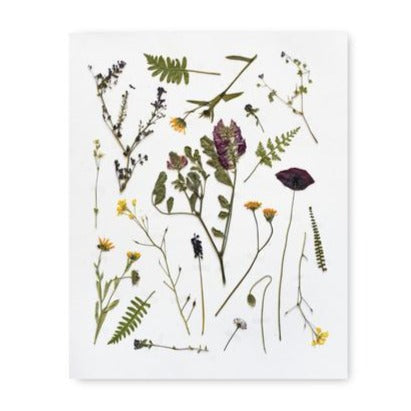 Pressed Tuscan Flowers Art Print