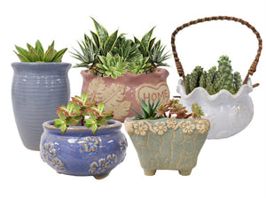 Spring Flower Ceramic Pot Collection