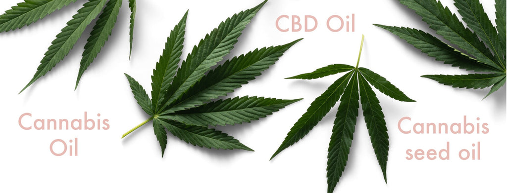 cannabis skincare: what's the difference between cannabis oil, CBD oil and cannabis seed oil?