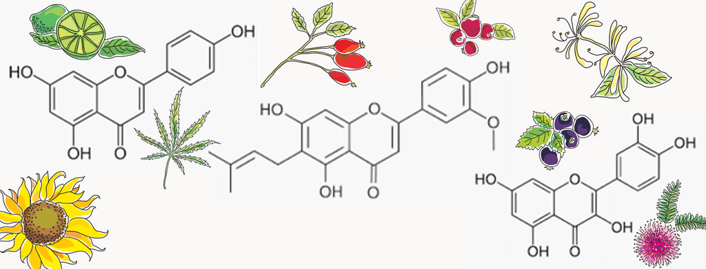 terpenes & bioflavonoids in skincare – what are they and how do they affect your skin?