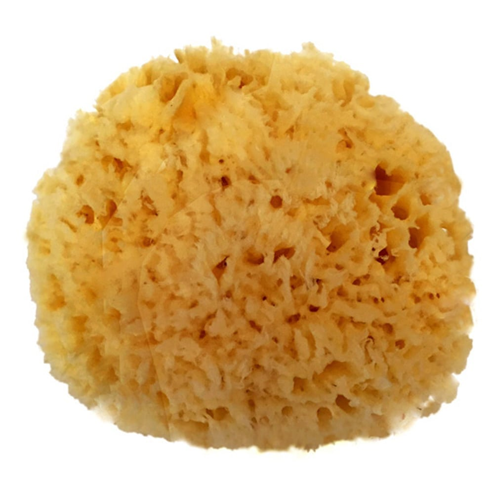 "NATURAL SEA WOOL SPONGE 5-6"" ""NATURAL RENEWABLE RESOURCE"""
