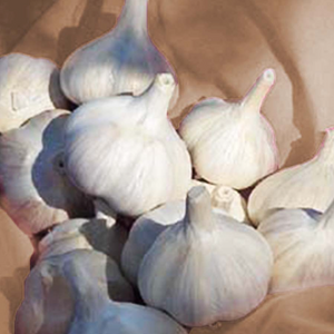 ROMANIAN RED TABLE GARLIC