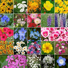 Load image into Gallery viewer, California Wildflower Seeds