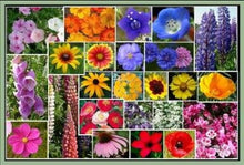 Load image into Gallery viewer, Pacific North West Wildflower Seeds