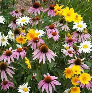 Partial Shade Wildflower Seeds