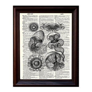 Jelly Fish Dictionary Print
