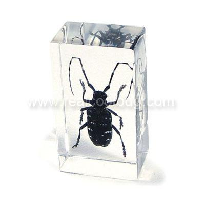 Long Horned Beetle Paperweight