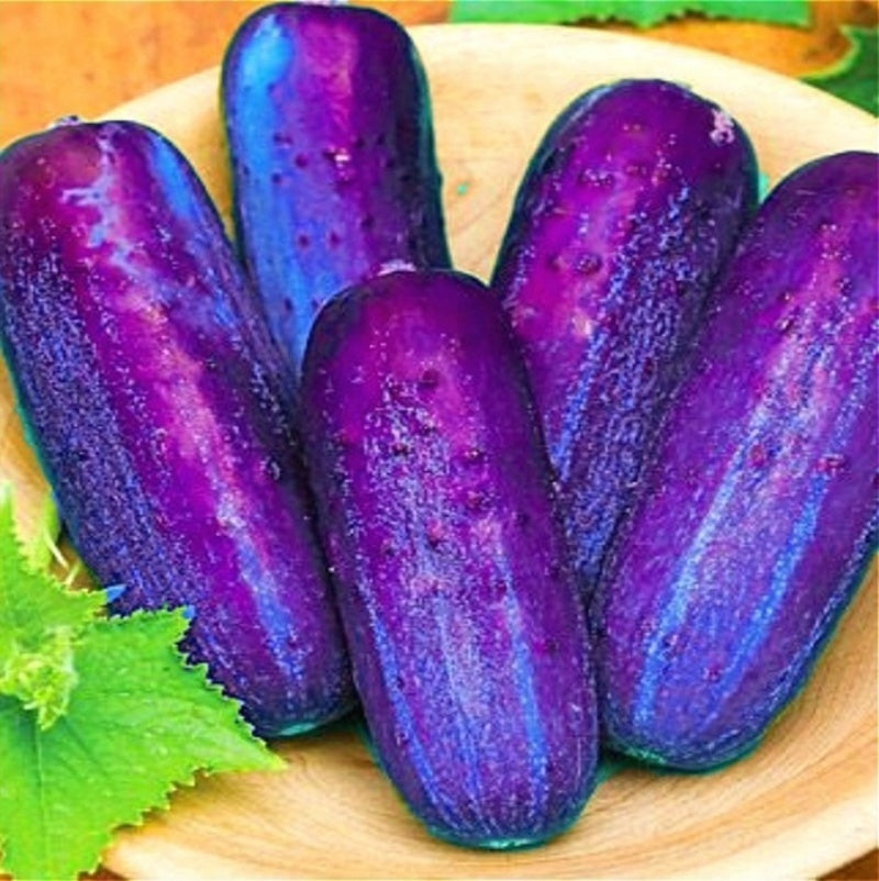 100Pcs Japanese Rare Purple Cucumber Seeds Organic Vegetable Seeds Fruit Seed Bonsai Plants Home Garden Decor