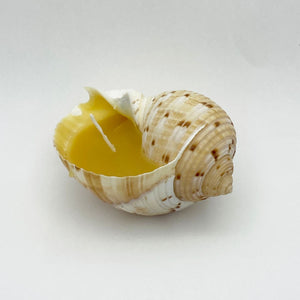 Beeswax Candle in Shell 2
