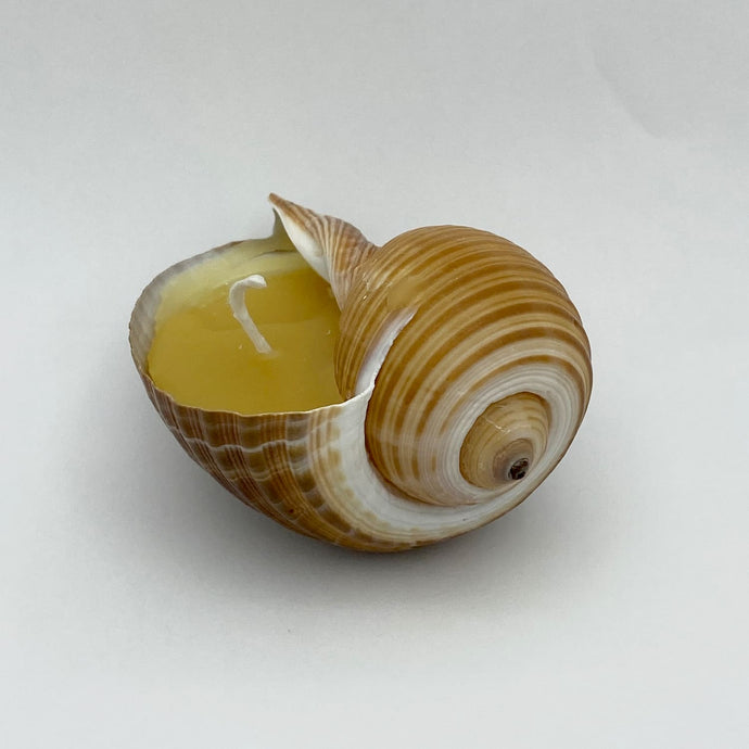Beeswax Candle in Shell 3