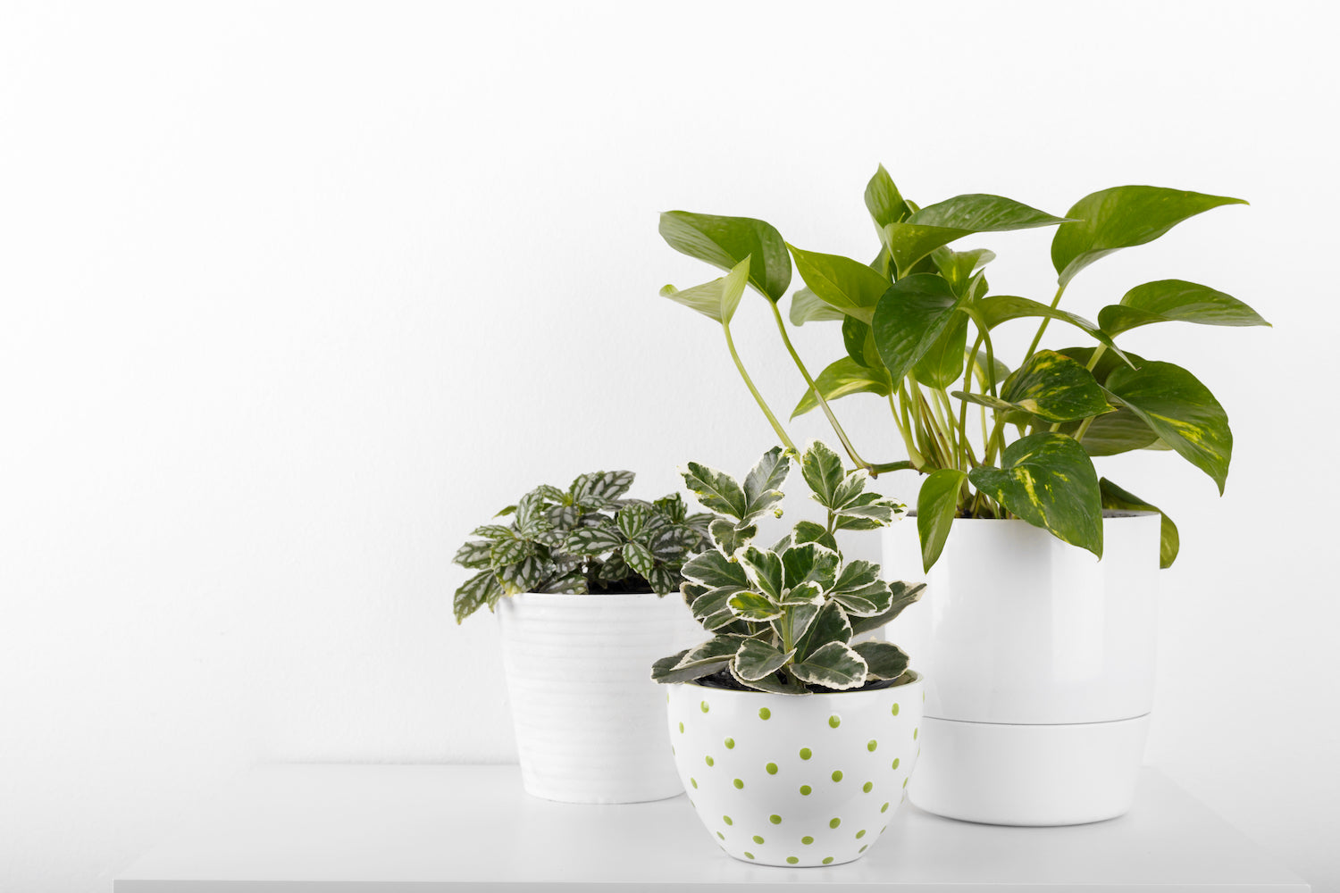 low light plant monthly subscription from palm and ninth