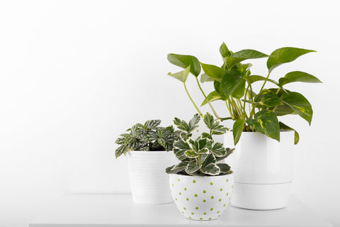 Low Light Plants Monthly Subscription from palm and ninth