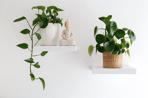 Medium Plants for Beginners Monthly Subscription from palm and ninth
