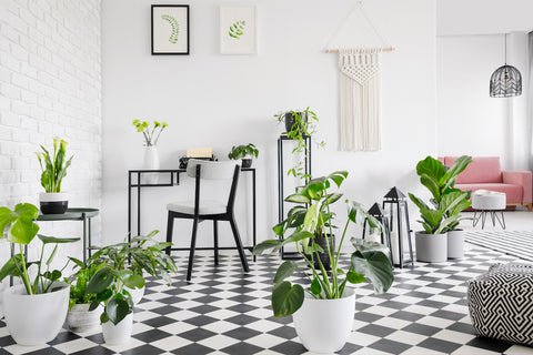 floor plants monthly subscription from palm and ninth
