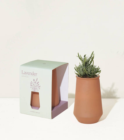 Tapered Tumbler - Grow Lavender