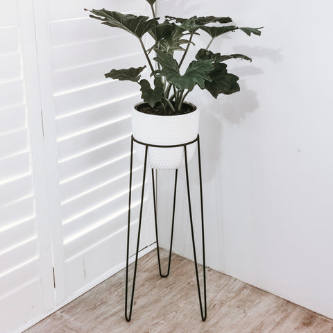 Single Plant Stand