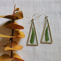 Ferns in Silver Triangles