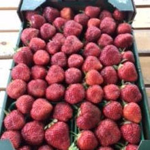Load image into Gallery viewer, Strawberries <br> Ripens May 20th.