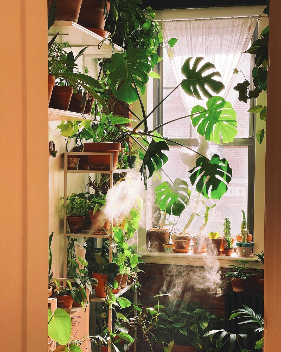 7 Most Common Houseplant Pests and How to Get Rid of Them