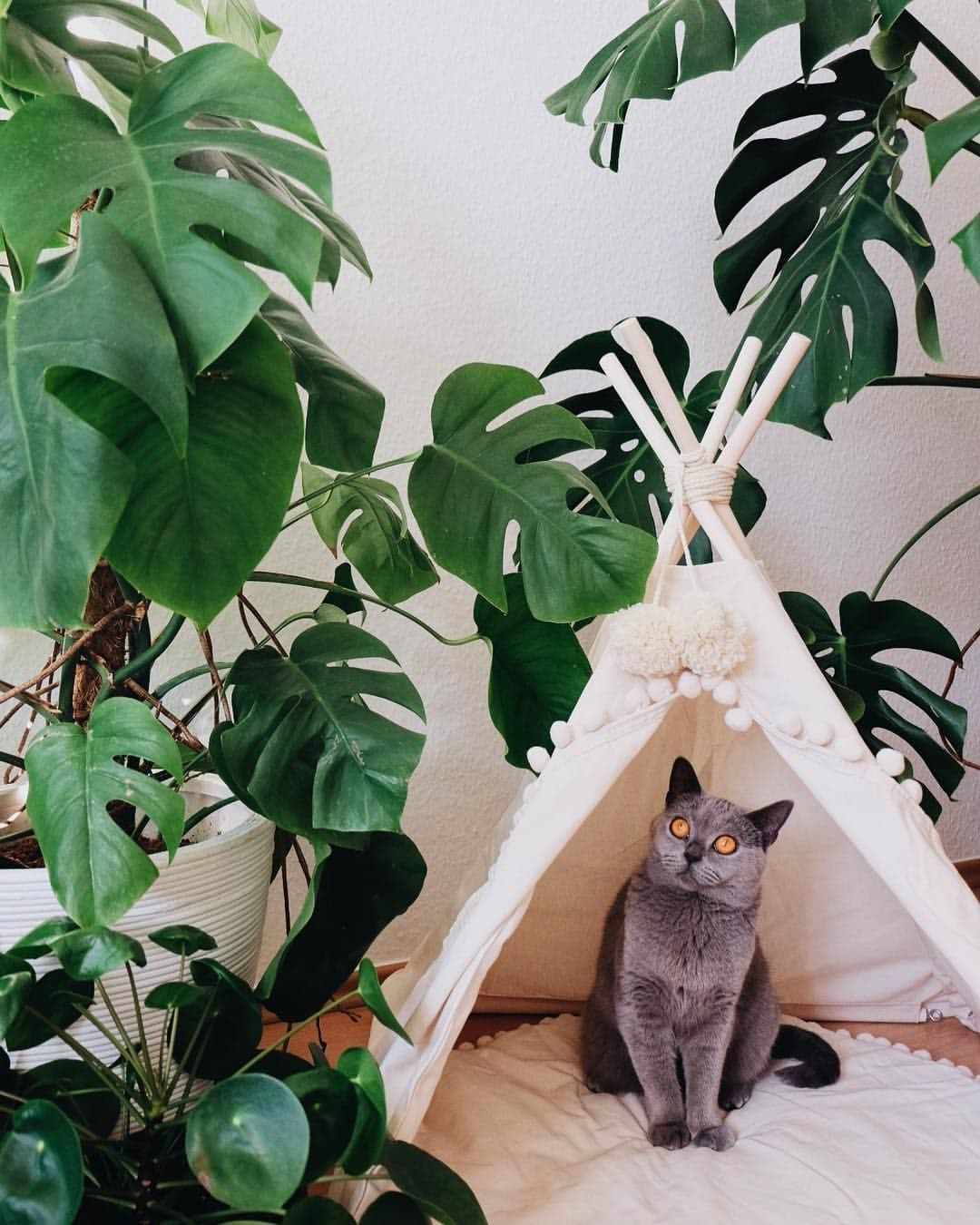 7 Effective Solutions on How to Keep Your Pets Safe From Your Plants