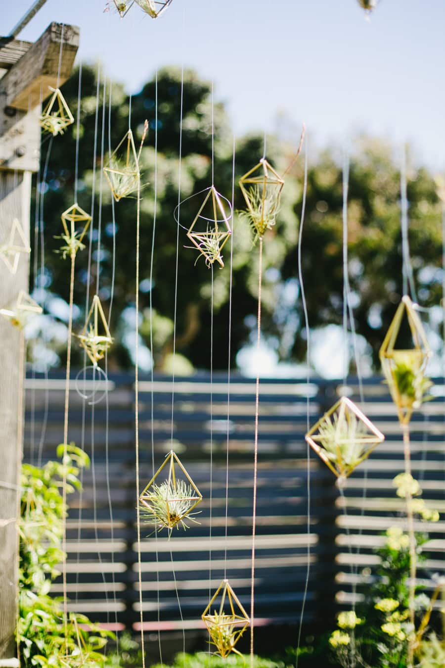 7 Creative Air Plant Display Ideas