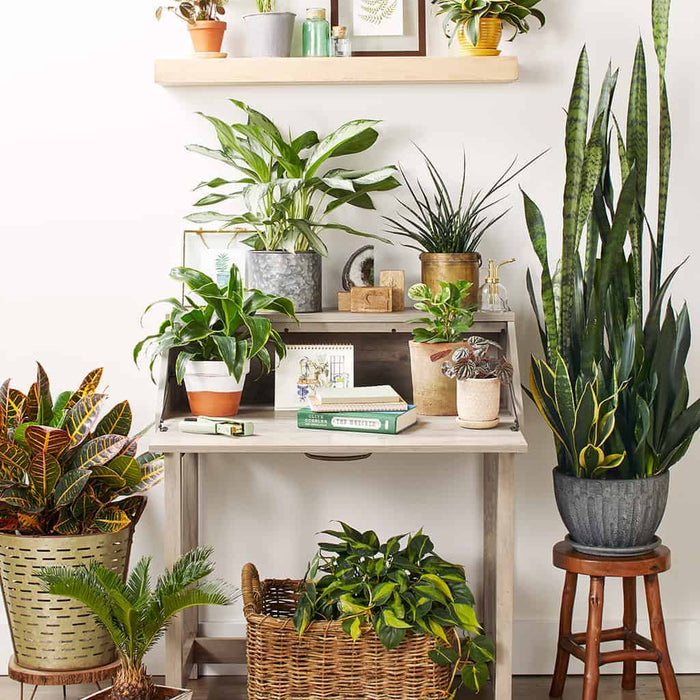 10 Best Air-Purifying Plants for Your Home