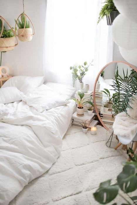 Effective Bedroom Plants for Better Sleep