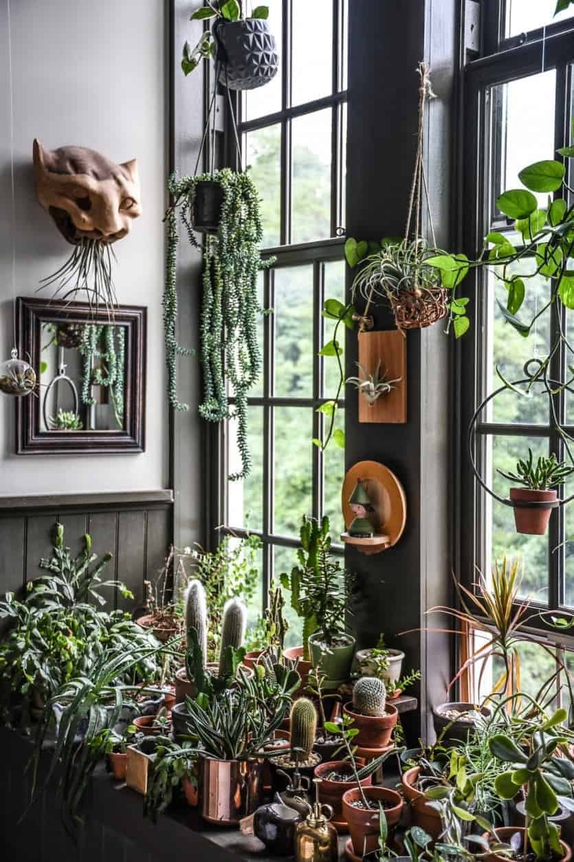 10 Best Houseplants You Must Have In Your Collection