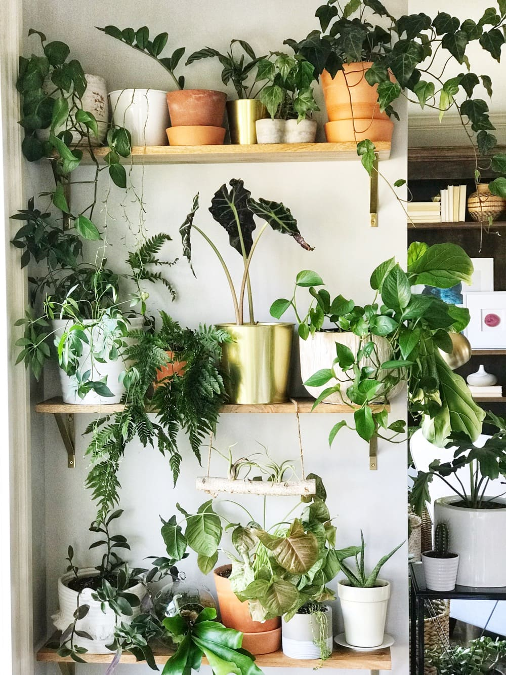 9 Care Tips for Houseplants in the Winter