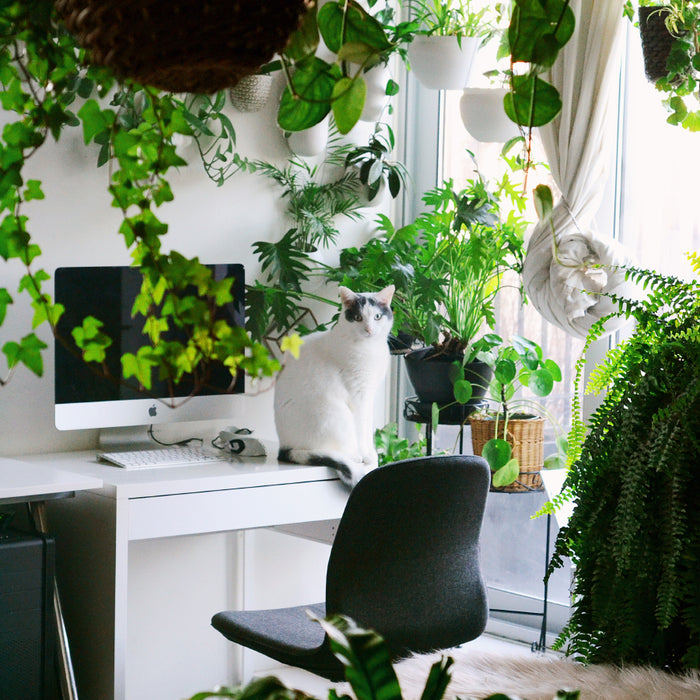 12 Cat-Friendly Houseplants for Your Furry Friend