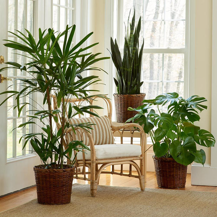 How to Fix These 6 Common Houseplant Problems