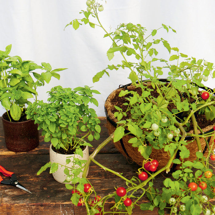 9 Common Container Gardening Mistakes You Should Avoid
