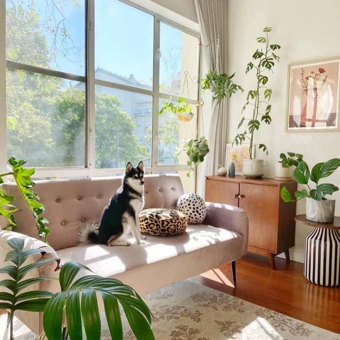 11 Dog-Friendly Houseplants for Your Favorite Buddy