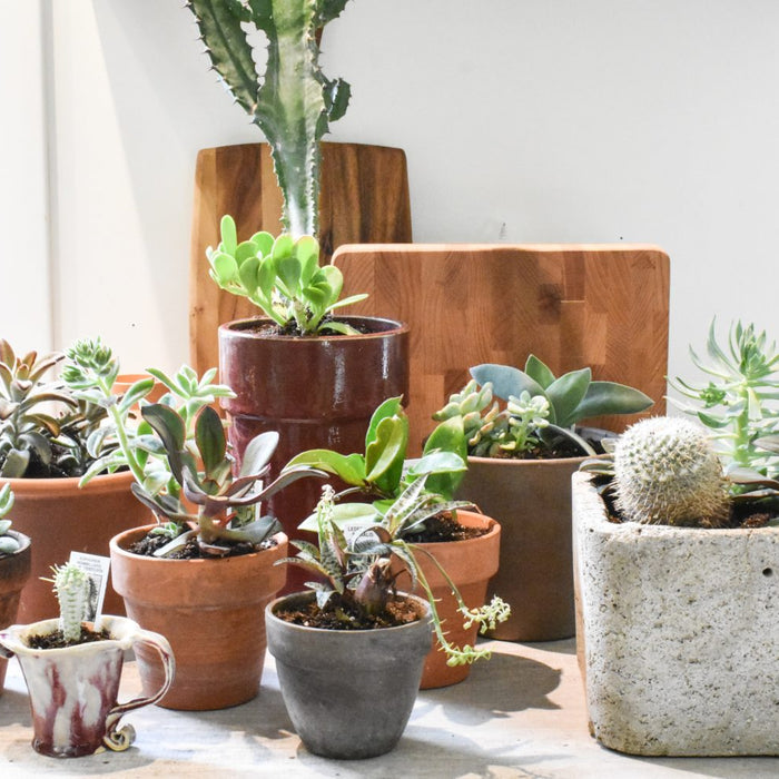 10 Hard to Kill Houseplants, We Promise