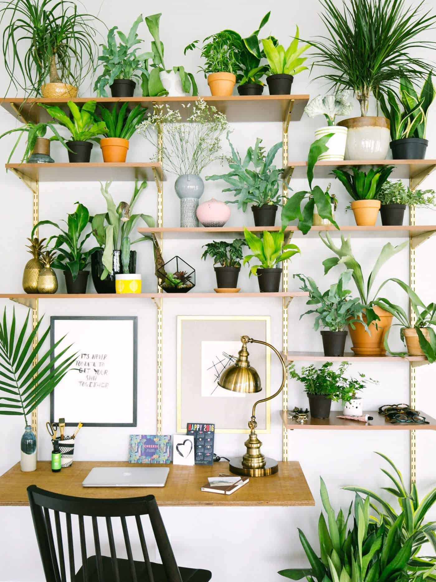 10 Best Home Office Plants to Boost Your Productivity