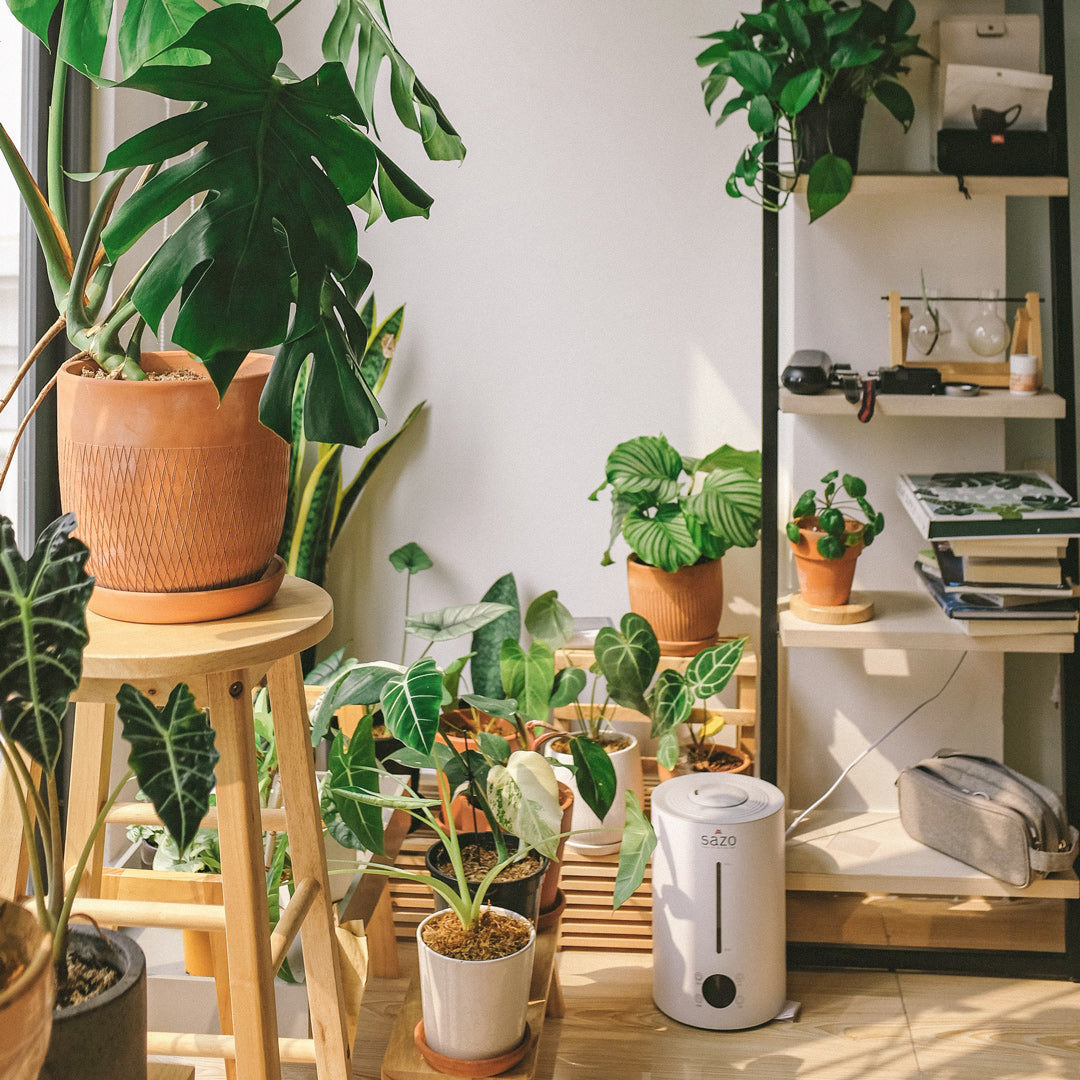 12 Must-Have Houseplants Tools for Your Jungalow