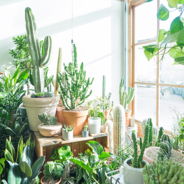 Top 10 Must-Have Houseplants in 2021