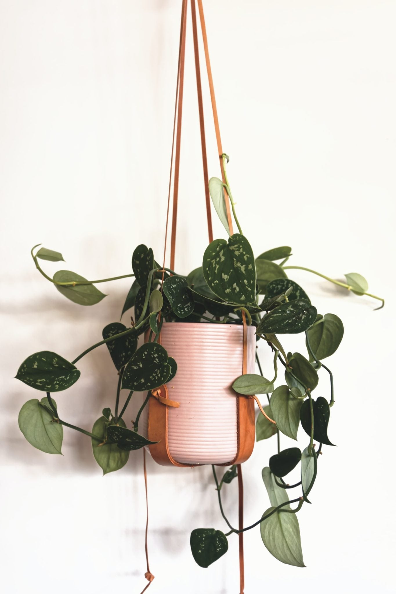 How to Care for Your Pothos