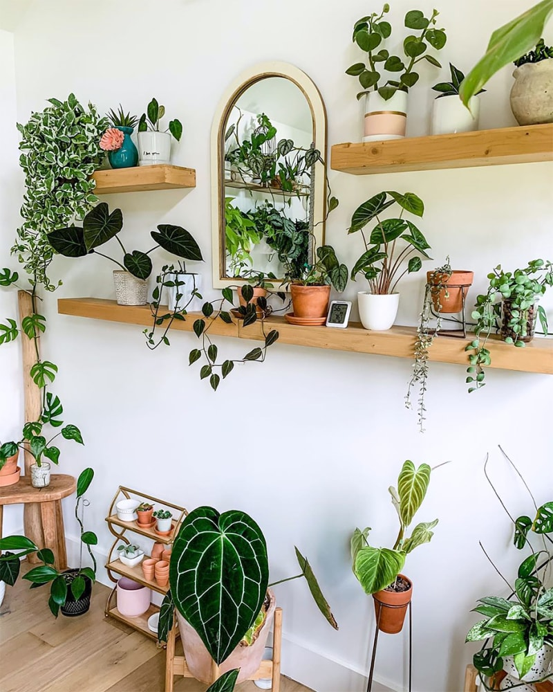 6 Ways on How to Save a Dying Indoor Plant