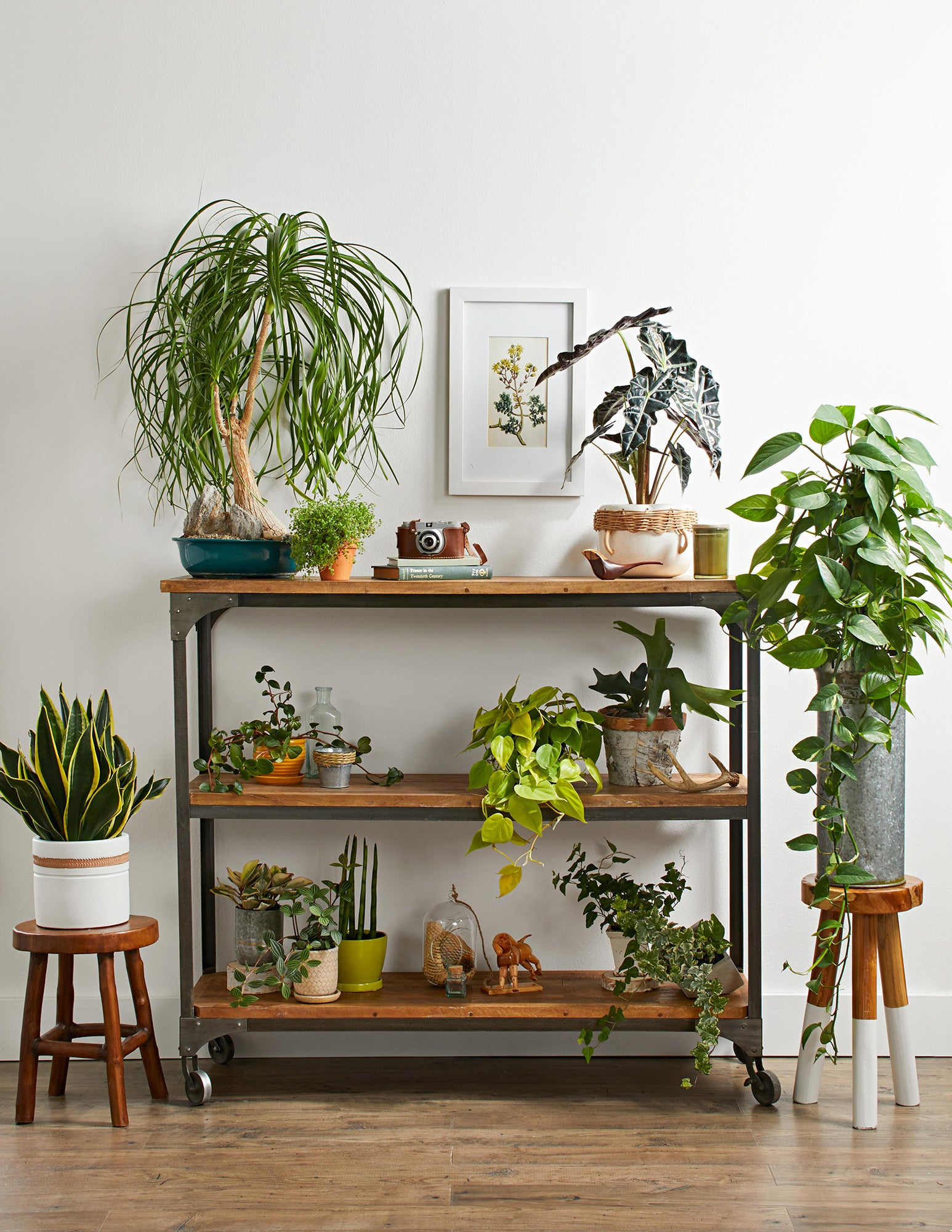 4 Simple Ways on How to Care for Your Plants While You're Away