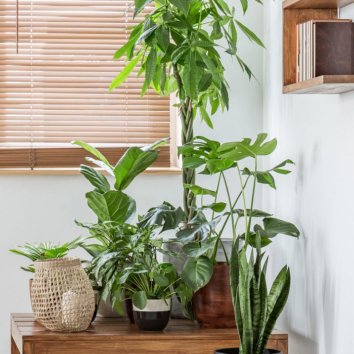 7 Steps on How to Debug Plants Before Bringing Them Indoors