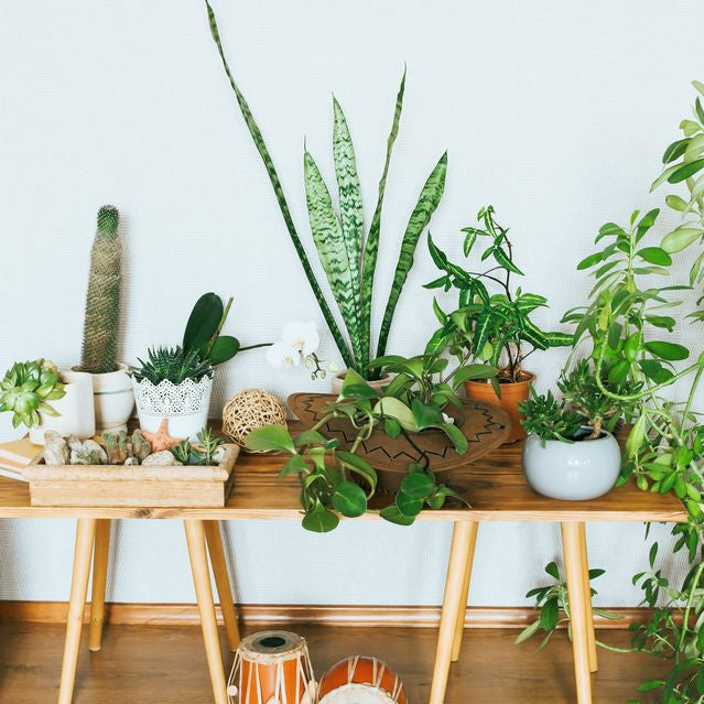 Beginner's Guide on How to Get Rid of the Common Houseplant Pests